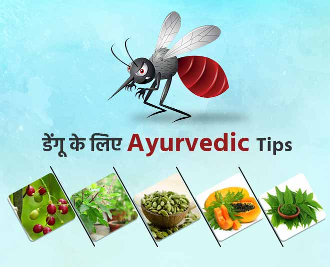 dengue tips article image