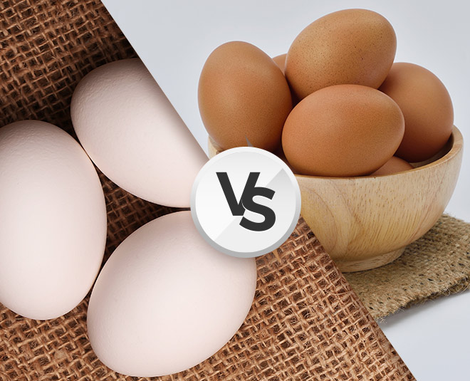 white egg vs brown egg main