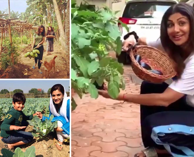 Image result for bollywood superstars grow vegetables in their home