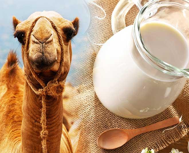 healthy camel milk