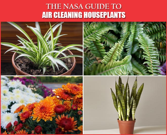 houseplants air cleaning