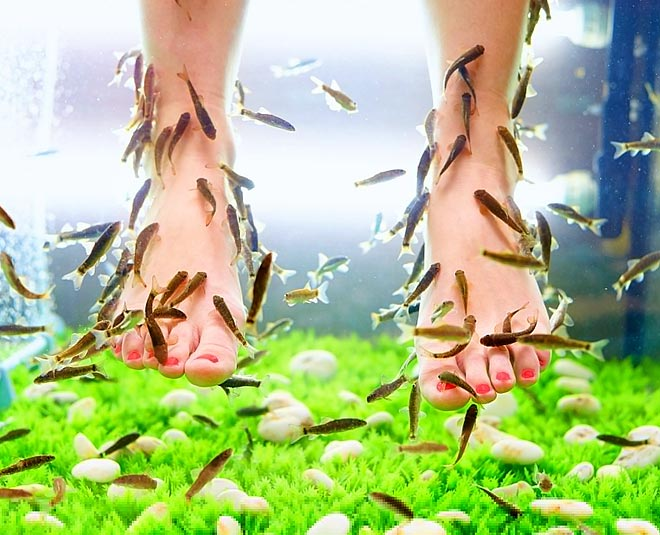 keep these things in mind while fish pedicure main