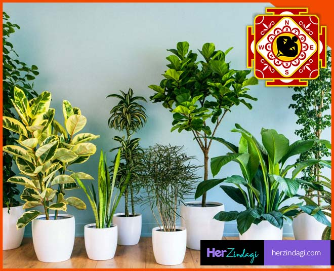 vastu tips for plants place them in right direction main