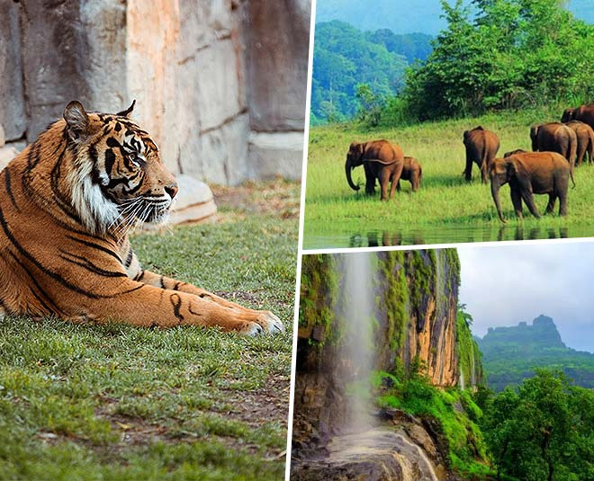 best wildlife sanctuaries maharshtra must visit in summer vacation main