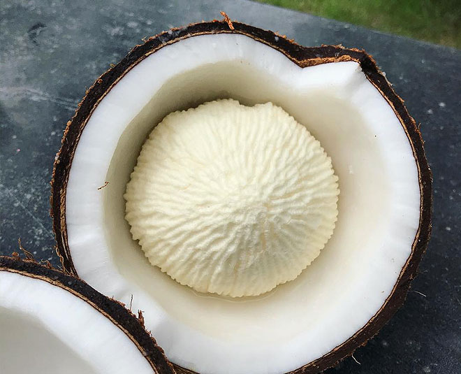 coconut embryo benefits ()