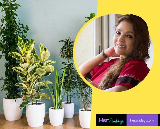 indoor plant to prevent pollution main