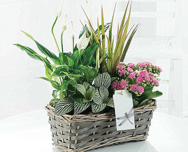 gift air purifying plant these festive