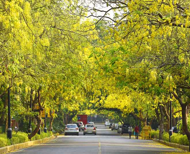 Delhi are adorned with dense trees main