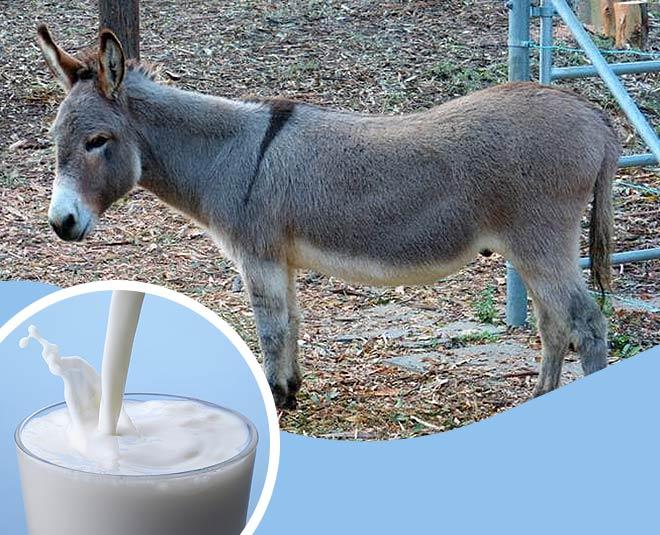 donkey milk very tasty main