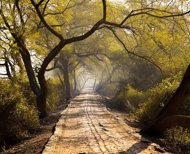 natural places you must visit in bharatpur rajasthan Main