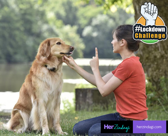 days train your dog m