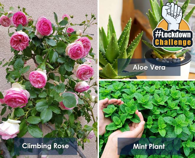 best plants to grow at home