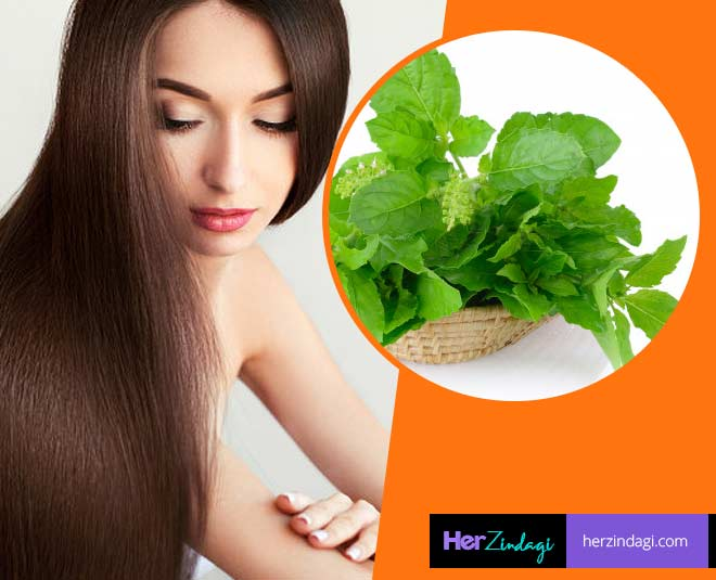 tulsi leaves for hair m