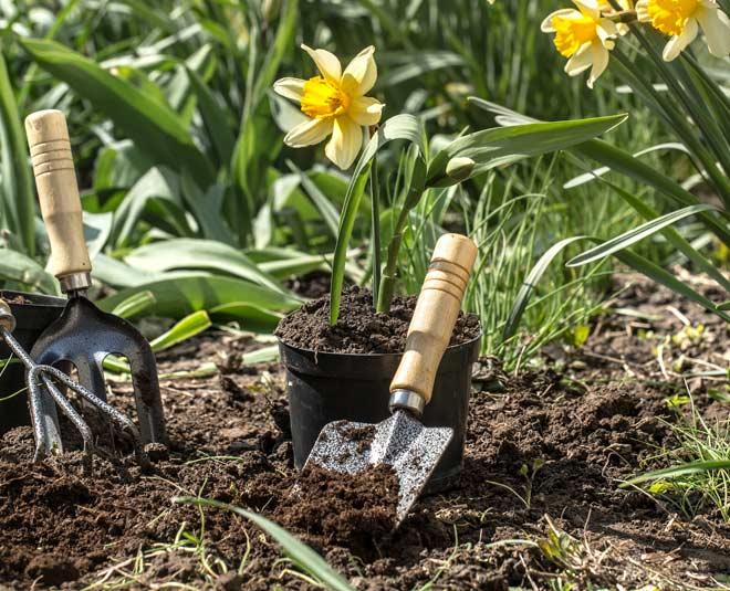 different ways to use vinegar in your garden tips