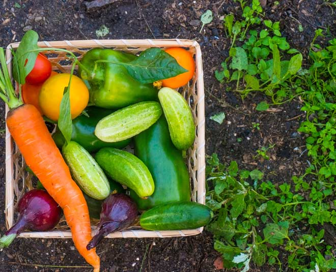 grow organic vegetables in winter