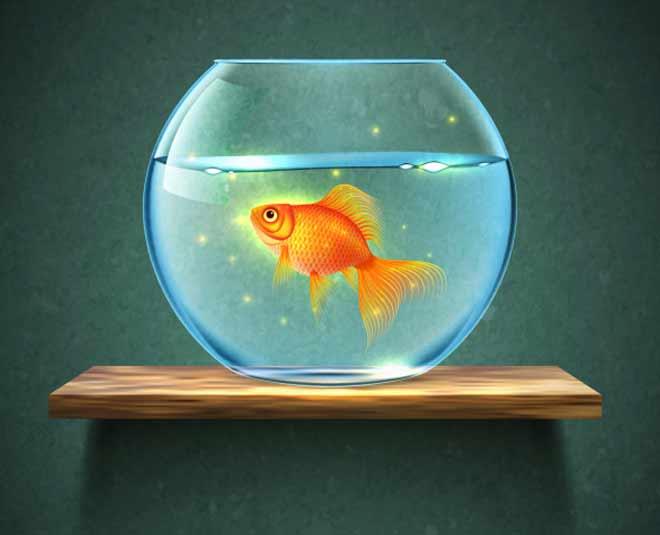 What is the benefit of aquarium