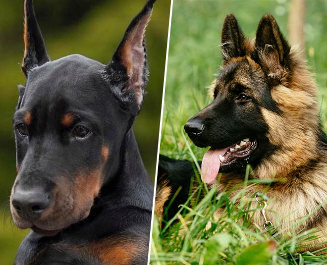 dog species best for family for protection main