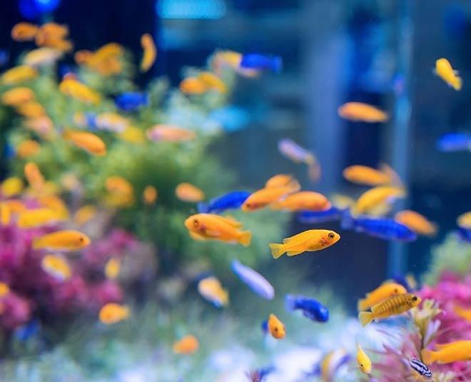 fish aquarium at home benefits for health