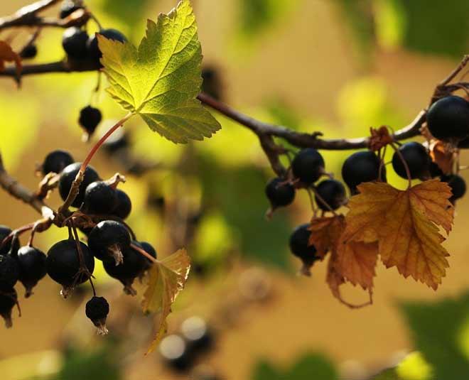vitamin c fruits destress