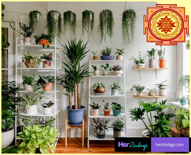 best vastu tips for plants