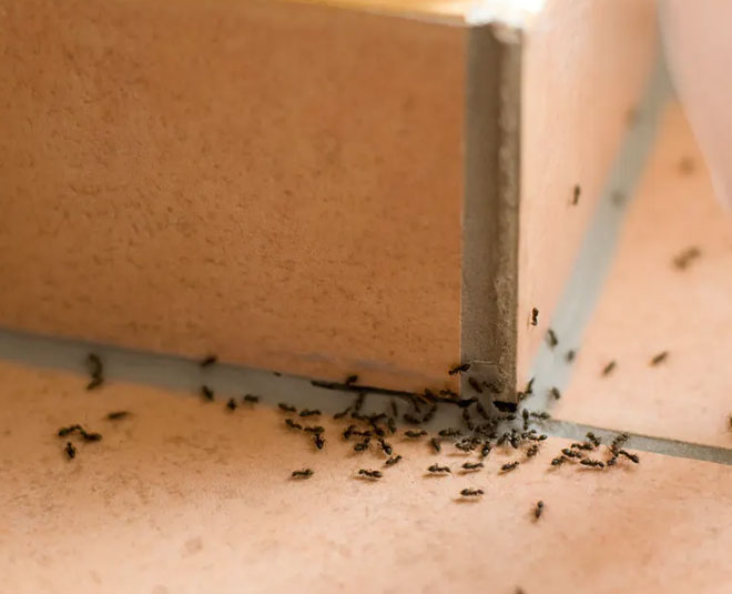 best ways to remove ants from home
