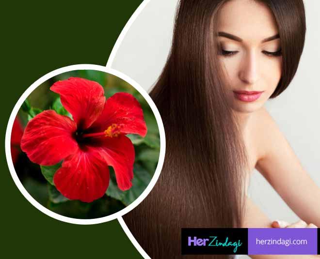 hibiscus flower natural colour main