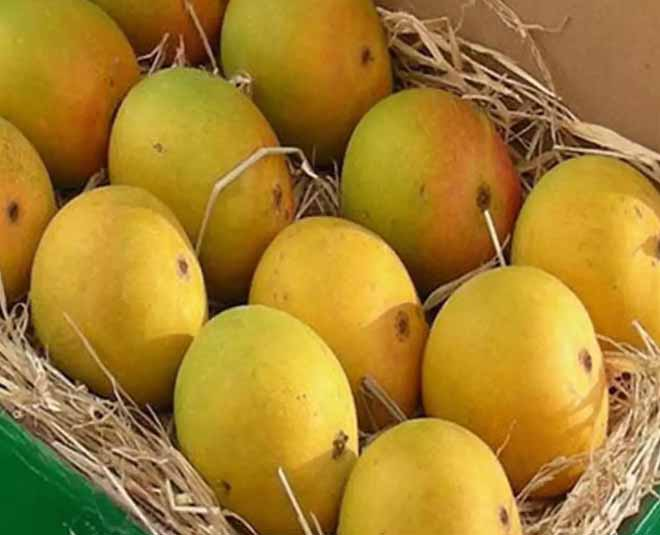 mango varieties that you should know main