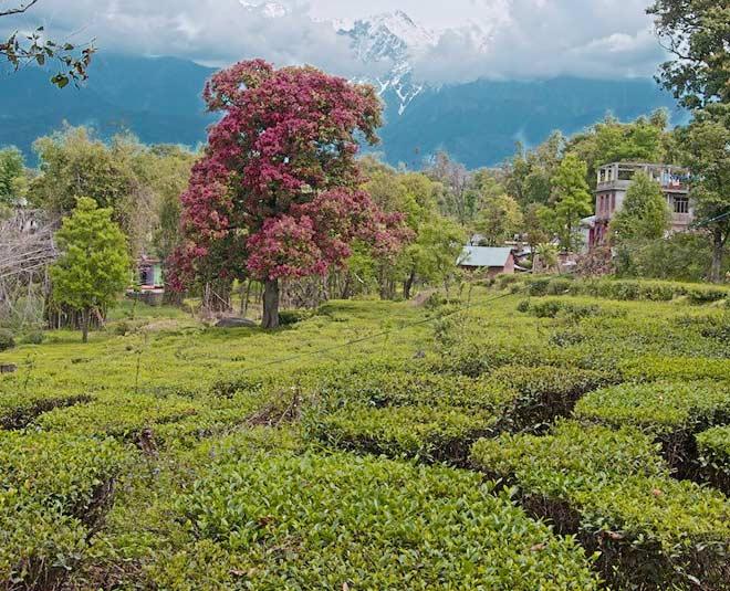 destinations in kangra himachal pradesh main