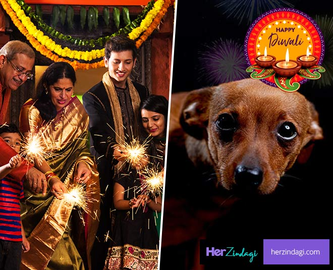 diwali and pets issues