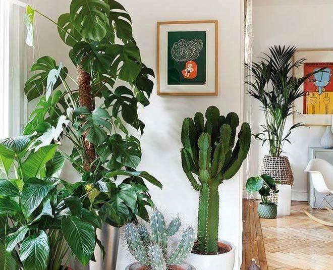 feng shui plants main