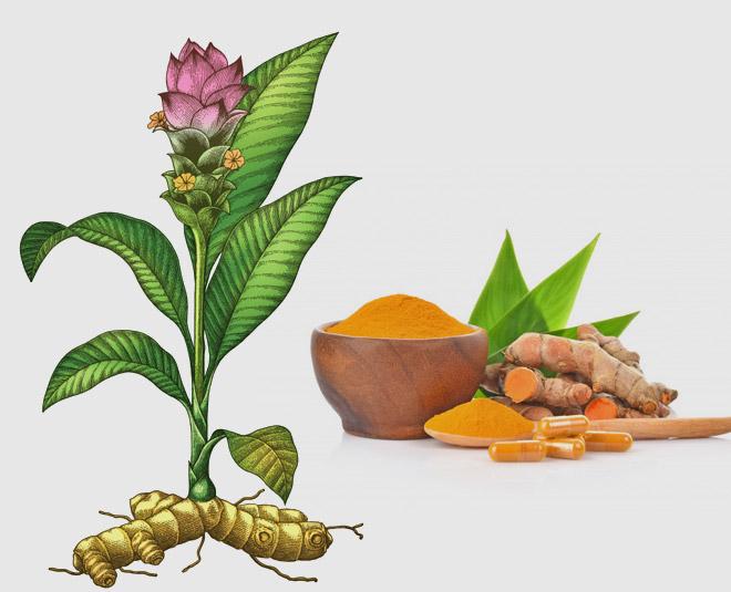 turmeric plant Main