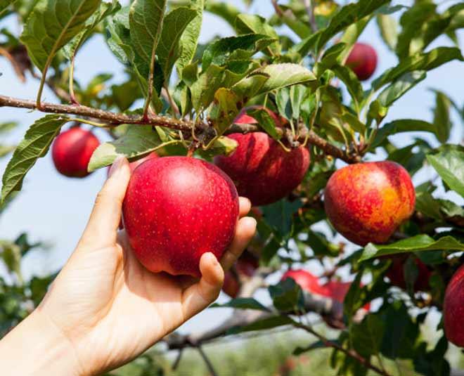 apple for skincare m