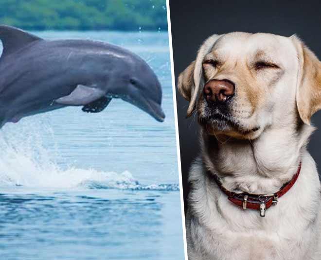 intelligent animals on earth