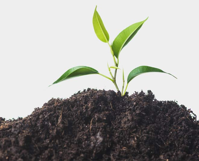 use expired milk to grow healthy plants tips