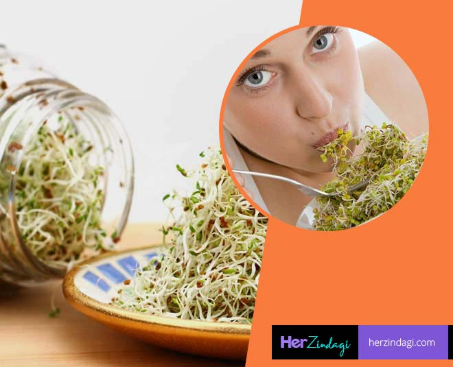 about alfalfa health benefits