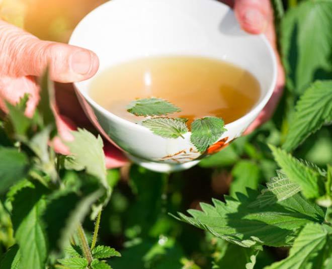 nettle tea  main