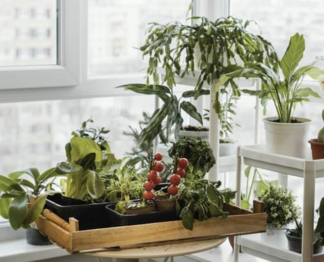 indoor besr plant