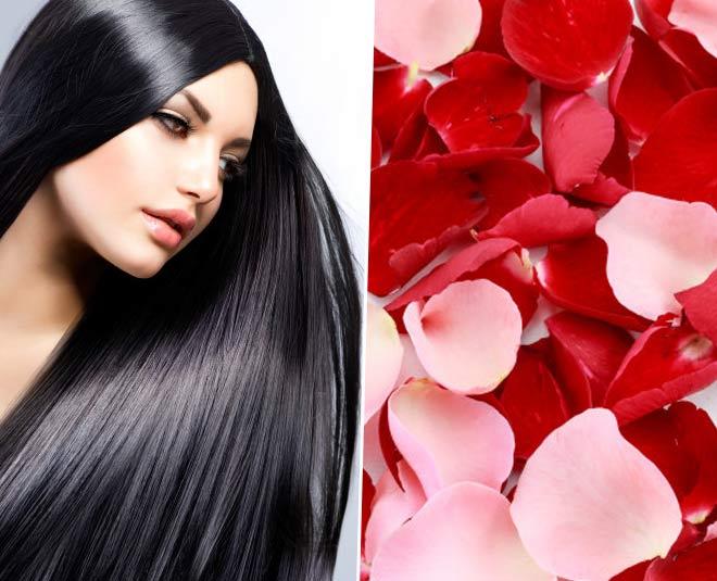 rose petals main