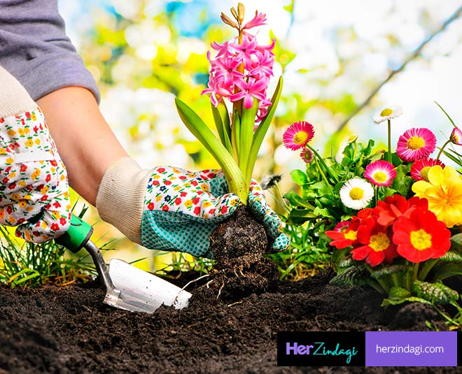 best flowering plants for winter