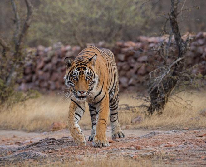 wild life sanctury near delhi Main