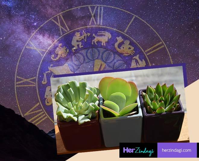 zodiac sign houseplants main