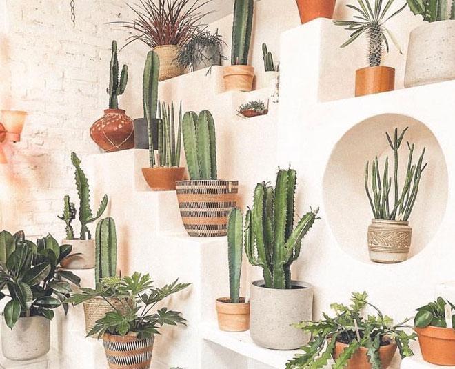 cactus home benefits main
