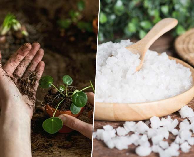 epsom salt for hindi