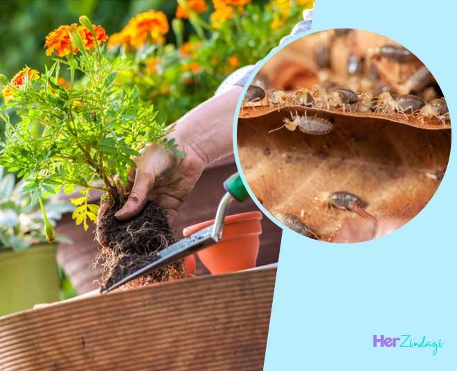 gardening tips for balcony