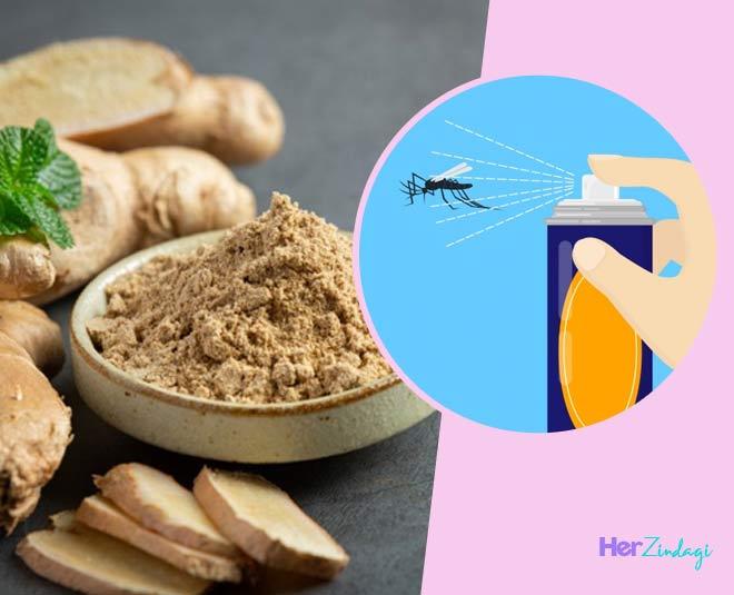 ginger powder natural pesticide spray at home