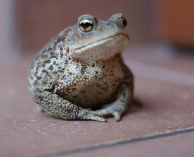how to get rid of frogs