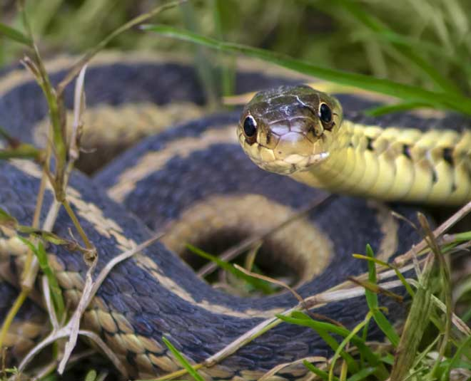 how to keep snakes away from home