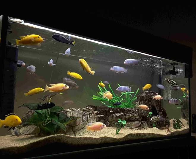 how to take care of aquariu tips