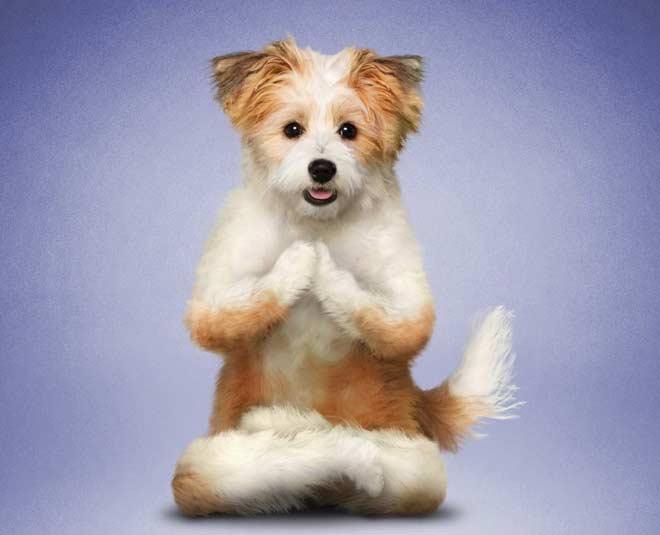 Dog yoga m