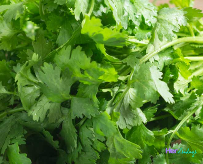 best ways to store coriander